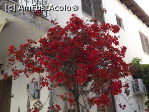 P03 [MAY-2016] Bougainvillea de Pefkochori