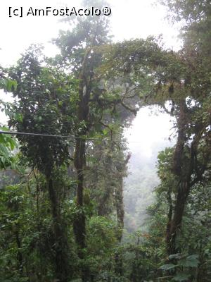 "P21 [JAN-2018] Canopy Santa Elena, Selva verde.  -- foto by <b>Nico15</b> [uploaded 24.03.18] - <span class=""allrVotedi"" id=""av952670"">Foto VOTATĂ de mine!</span><div class=""delVotI"" id=""sv952670""><a href=""/pma_sterge_vot.php?vid=&fid=952670"">Şterge vot</a></div><span id=""v9952670"" class=""displayinline;""> - <a style=""color:red;"" href=""javascript:votez(952670)""><b>LIKE</b> = Votează poza</a><img class=""loader"" id=""f952670Validating"" src=""/imagini/loader.gif"" border=""0"" /><span class=""AjErrMes""  id=""e952670MesajEr""></span>"