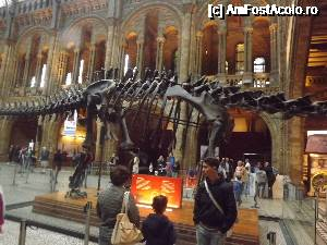 "P17 [AUG-2014] Natural History Museum -- foto by <b>robert</b> [uploaded 12.11.15] - <span class=""allrVotedi"" id=""av690932"">Foto VOTATĂ de mine!</span><div class=""delVotI"" id=""sv690932""><a href=""/pma_sterge_vot.php?vid=&fid=690932"">Şterge vot</a></div><span id=""v9690932"" class=""displayinline;""> - <a style=""color:red;"" href=""javascript:votez(690932)""><b>LIKE</b> = Votează poza</a><img class=""loader"" id=""f690932Validating"" src=""/imagini/loader.gif"" border=""0"" /><span class=""AjErrMes""  id=""e690932MesajEr""></span>"
