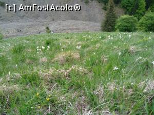 "P08 [MAY-2018] Nu faci mult pana in vale -- foto by <b>Denisa13</b> [uploaded 29.05.18] - <span class=""allrVotedi"" id=""av970185"">Foto VOTATĂ de mine!</span><div class=""delVotI"" id=""sv970185""><a href=""/pma_sterge_vot.php?vid=&fid=970185"">Şterge vot</a></div><span id=""v9970185"" class=""displayinline;""> - <a style=""color:red;"" href=""javascript:votez(970185)""><b>LIKE</b> = Votează poza</a><img class=""loader"" id=""f970185Validating"" src=""/imagini/loader.gif"" border=""0"" /><span class=""AjErrMes""  id=""e970185MesajEr""></span>"