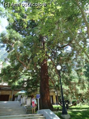 "P05 [AUG-2016] marele sequoia, martor mut al cresterii si decaderii statiunii -- foto by <b>buterfly</b> [uploaded 15.09.16] - <span class=""allrVotedi"" id=""av789818"">Foto VOTATĂ de mine!</span><div class=""delVotI"" id=""sv789818""><a href=""/pma_sterge_vot.php?vid=&fid=789818"">Şterge vot</a></div><span id=""v9789818"" class=""displayinline;""> - <a style=""color:red;"" href=""javascript:votez(789818)""><b>LIKE</b> = Votează poza</a><img class=""loader"" id=""f789818Validating"" src=""/imagini/loader.gif"" border=""0"" /><span class=""AjErrMes""  id=""e789818MesajEr""></span>"