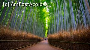 "P05 <small>[JUN-2018]</small> Bamboo forest » foto by mcnegoita   <span class=""allrVoted glyphicon glyphicon-heart hidden"" id=""av1013011""></span> <a class=""m-l-10 hidden pull-right"" id=""sv1013011"" onclick=""voting_Foto_DelVot(,1013011,0)"" role=""button"">șterge vot <span class=""glyphicon glyphicon-remove""></span></a> <img class=""hidden pull-right m-r-10 m-l-10""  id=""f1013011W9"" src=""/imagini/loader.gif"" border=""0"" /> <a id=""v91013011"" class="" c-red pull-right""  onclick=""voting_Foto_SetVot(1013011)"" role=""button""><span class=""glyphicon glyphicon-heart-empty""></span> <b>LIKE</b> = Votează poza</a><span class=""AjErrMes hidden"" id=""e1013011ErM""></span>"