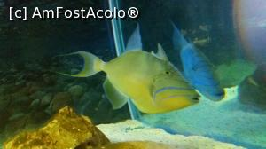 "P02 [AUG-2017] Tropicarium Park -- foto by <b>GCC</b> [uploaded 09.08.17] - <span class=""allrVotedi"" id=""av887123"">Foto VOTATĂ de mine!</span><div class=""delVotI"" id=""sv887123""><a href=""/pma_sterge_vot.php?vid=&fid=887123"">Şterge vot</a></div><span id=""v9887123"" class=""displayinline;""> - <a style=""color:red;"" href=""javascript:votez(887123)""><b>LIKE</b> = Votează poza</a><img class=""loader"" id=""f887123Validating"" src=""/imagini/loader.gif"" border=""0"" /><span class=""AjErrMes""  id=""e887123MesajEr""></span>"