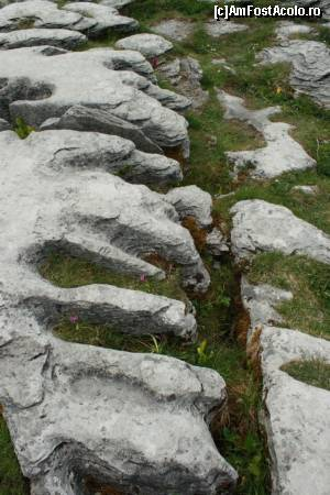 "P21 [MAY-2014] Limestone la Poulnabrone Dolmen -- foto by <b>ariciu</b> [uploaded 25.05.14] - <span class=""allrVotedi"" id=""av511337"">Foto VOTATĂ de mine!</span><div class=""delVotI"" id=""sv511337""><a href=""/pma_sterge_vot.php?vid=&fid=511337"">Şterge vot</a></div><span id=""v9511337"" class=""displayinline;""> - <a style=""color:red;"" href=""javascript:votez(511337)""><b>LIKE</b> = Votează poza</a><img class=""loader"" id=""f511337Validating"" src=""/imagini/loader.gif"" border=""0"" /><span class=""AjErrMes""  id=""e511337MesajEr""></span>"