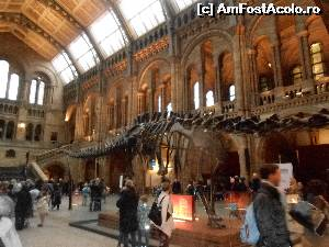 "P06 [NOV-2014] scheletul gigantic de Diplodocus care nu a incaput tot in fotografie -- foto by <b>buterfly</b> [uploaded 10.11.14] - <span class=""allrVotedi"" id=""av573197"">Foto VOTATĂ de mine!</span><div class=""delVotI"" id=""sv573197""><a href=""/pma_sterge_vot.php?vid=&fid=573197"">Şterge vot</a></div><span id=""v9573197"" class=""displayinline;""> - <a style=""color:red;"" href=""javascript:votez(573197)""><b>LIKE</b> = Votează poza</a><img class=""loader"" id=""f573197Validating"" src=""/imagini/loader.gif"" border=""0"" /><span class=""AjErrMes""  id=""e573197MesajEr""></span>"