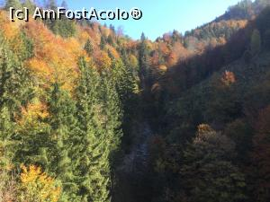 "P14 [OCT-2018] Mai are rost sa comentez?  -- foto by <b>mishu</b> [uploaded 13.10.18] - <span class=""allrVotedi"" id=""av1020183"">Foto VOTATĂ de mine!</span><div class=""delVotI"" id=""sv1020183""><a href=""/pma_sterge_vot.php?vid=&fid=1020183"">Şterge vot</a></div><span id=""v91020183"" class=""displayinline;""> - <a style=""color:red;"" href=""javascript:votez(1020183)""><b>LIKE</b> = Votează poza</a><img class=""loader"" id=""f1020183Validating"" src=""/imagini/loader.gif"" border=""0"" /><span class=""AjErrMes""  id=""e1020183MesajEr""></span>"