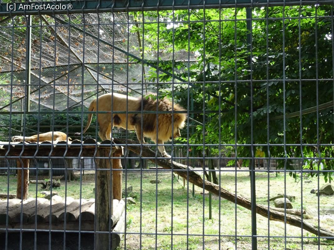 cautand gradina zoologica