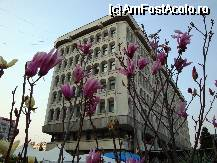 "P20 [MAR-2010] Magnolii inflorite langa Prefectura Arges -- foto by <b>mariana.olaru</b> [uploaded 07.04.10] - <span class=""allrVotedi"" id=""av61719"">Foto VOTATĂ de mine!</span><div class=""delVotI"" id=""sv61719""><a href=""/pma_sterge_vot.php?vid=&fid=61719"">Şterge vot</a></div><span id=""v961719"" class=""displayinline;""> - <a style=""color:red;"" href=""javascript:votez(61719)""><b>LIKE</b> = Votează poza</a><img class=""loader"" id=""f61719Validating"" src=""/imagini/loader.gif"" border=""0"" /><span class=""AjErrMes""  id=""e61719MesajEr""></span>"