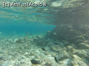 "P16 [NOV-2016] underwater -- foto by <b>andreea_kamelya</b> [uploaded 15.12.16] - <span class=""allrVotedi"" id=""av819359"">Foto VOTATĂ de mine!</span><div class=""delVotI"" id=""sv819359""><a href=""/pma_sterge_vot.php?vid=&fid=819359"">Şterge vot</a></div><span id=""v9819359"" class=""displayinline;""> - <a style=""color:red;"" href=""javascript:votez(819359)""><b>LIKE</b> = Votează poza</a><img class=""loader"" id=""f819359Validating"" src=""/imagini/loader.gif"" border=""0"" /><span class=""AjErrMes""  id=""e819359MesajEr""></span>"