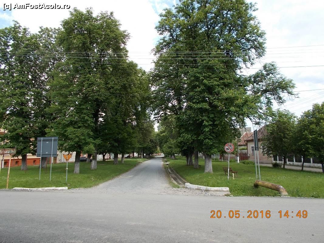 Harta O Zi In Dumbrăveni Dumbrăveni Sb Vedere Imagini