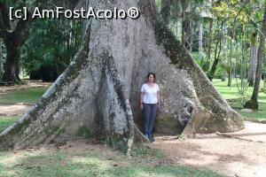 "P25 [JAN-2019] Rio de Janeiro, Jardim Botânico, Grădina Botanică, copaci seculari... -- foto by <b>mprofeanu</b> [uploaded 27.01.19] - <span class=""allrVotedi"" id=""av1050174"">Foto VOTATĂ de mine!</span><div class=""delVotI"" id=""sv1050174""><a href=""/pma_sterge_vot.php?vid=&fid=1050174"">Şterge vot</a></div><span id=""v91050174"" class=""displayinline;""> - <a style=""color:red;"" href=""javascript:votez(1050174)""><b>LIKE</b> = Votează poza</a><img class=""loader"" id=""f1050174Validating"" src=""/imagini/loader.gif"" border=""0"" /><span class=""AjErrMes""  id=""e1050174MesajEr""></span>"