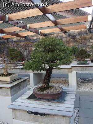 "P20 [JUN-2018] Bonsai în National Arboretum -- foto by <b>DanCld</b> [uploaded 26.06.18] - <span class=""allrVotedi"" id=""av978563"">Foto VOTATĂ de mine!</span><div class=""delVotI"" id=""sv978563""><a href=""/pma_sterge_vot.php?vid=&fid=978563"">Şterge vot</a></div><span id=""v9978563"" class=""displayinline;""> - <a style=""color:red;"" href=""javascript:votez(978563)""><b>LIKE</b> = Votează poza</a><img class=""loader"" id=""f978563Validating"" src=""/imagini/loader.gif"" border=""0"" /><span class=""AjErrMes""  id=""e978563MesajEr""></span>"