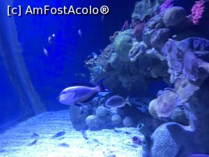 "P39 <small>[SEP-2018]</small> Hurghada Grand Aquarium » foto by nicole33  -  <span class=""allrVoted glyphicon glyphicon-heart hidden"" id=""av1025357""></span> <a class=""m-l-10 hidden"" id=""sv1025357"" onclick=""voting_Foto_DelVot(,1025357,24519)"" role=""button"">șterge vot <span class=""glyphicon glyphicon-remove""></span></a> <a id=""v91025357"" class="" c-red""  onclick=""voting_Foto_SetVot(1025357)"" role=""button""><span class=""glyphicon glyphicon-heart-empty""></span> <b>LIKE</b> = Votează poza</a> <img class=""hidden""  id=""f1025357W9"" src=""/imagini/loader.gif"" border=""0"" /><span class=""AjErrMes hidden"" id=""e1025357ErM""></span>"