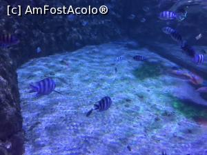 "P42 <small>[SEP-2018]</small> Hurghada Grand Aquarium » foto by nicole33  -  <span class=""allrVoted glyphicon glyphicon-heart hidden"" id=""av1025360""></span> <a class=""m-l-10 hidden"" id=""sv1025360"" onclick=""voting_Foto_DelVot(,1025360,24519)"" role=""button"">șterge vot <span class=""glyphicon glyphicon-remove""></span></a> <a id=""v91025360"" class="" c-red""  onclick=""voting_Foto_SetVot(1025360)"" role=""button""><span class=""glyphicon glyphicon-heart-empty""></span> <b>LIKE</b> = Votează poza</a> <img class=""hidden""  id=""f1025360W9"" src=""/imagini/loader.gif"" border=""0"" /><span class=""AjErrMes hidden"" id=""e1025360ErM""></span>"