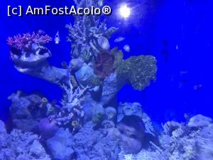 "P43 <small>[SEP-2018]</small> Hurghada Grand Aquarium » foto by nicole33  -  <span class=""allrVoted glyphicon glyphicon-heart hidden"" id=""av1025361""></span> <a class=""m-l-10 hidden"" id=""sv1025361"" onclick=""voting_Foto_DelVot(,1025361,24519)"" role=""button"">șterge vot <span class=""glyphicon glyphicon-remove""></span></a> <a id=""v91025361"" class="" c-red""  onclick=""voting_Foto_SetVot(1025361)"" role=""button""><span class=""glyphicon glyphicon-heart-empty""></span> <b>LIKE</b> = Votează poza</a> <img class=""hidden""  id=""f1025361W9"" src=""/imagini/loader.gif"" border=""0"" /><span class=""AjErrMes hidden"" id=""e1025361ErM""></span>"