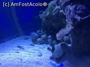 "P44 <small>[SEP-2018]</small> Hurghada Grand Aquarium » foto by nicole33  -  <span class=""allrVoted glyphicon glyphicon-heart hidden"" id=""av1025362""></span> <a class=""m-l-10 hidden"" id=""sv1025362"" onclick=""voting_Foto_DelVot(,1025362,24519)"" role=""button"">șterge vot <span class=""glyphicon glyphicon-remove""></span></a> <a id=""v91025362"" class="" c-red""  onclick=""voting_Foto_SetVot(1025362)"" role=""button""><span class=""glyphicon glyphicon-heart-empty""></span> <b>LIKE</b> = Votează poza</a> <img class=""hidden""  id=""f1025362W9"" src=""/imagini/loader.gif"" border=""0"" /><span class=""AjErrMes hidden"" id=""e1025362ErM""></span>"
