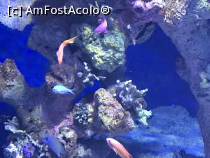 "P52 <small>[SEP-2018]</small> Hurghada Grand Aquarium » foto by nicole33  -  <span class=""allrVoted glyphicon glyphicon-heart hidden"" id=""av1025370""></span> <a class=""m-l-10 hidden"" id=""sv1025370"" onclick=""voting_Foto_DelVot(,1025370,24519)"" role=""button"">șterge vot <span class=""glyphicon glyphicon-remove""></span></a> <a id=""v91025370"" class="" c-red""  onclick=""voting_Foto_SetVot(1025370)"" role=""button""><span class=""glyphicon glyphicon-heart-empty""></span> <b>LIKE</b> = Votează poza</a> <img class=""hidden""  id=""f1025370W9"" src=""/imagini/loader.gif"" border=""0"" /><span class=""AjErrMes hidden"" id=""e1025370ErM""></span>"