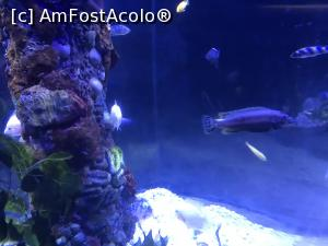 "P55 <small>[SEP-2018]</small> Hurghada Grand Aquarium » foto by nicole33  -  <span class=""allrVoted glyphicon glyphicon-heart hidden"" id=""av1025373""></span> <a class=""m-l-10 hidden"" id=""sv1025373"" onclick=""voting_Foto_DelVot(,1025373,24519)"" role=""button"">șterge vot <span class=""glyphicon glyphicon-remove""></span></a> <a id=""v91025373"" class="" c-red""  onclick=""voting_Foto_SetVot(1025373)"" role=""button""><span class=""glyphicon glyphicon-heart-empty""></span> <b>LIKE</b> = Votează poza</a> <img class=""hidden""  id=""f1025373W9"" src=""/imagini/loader.gif"" border=""0"" /><span class=""AjErrMes hidden"" id=""e1025373ErM""></span>"