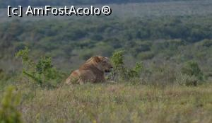 "P15 [MAR-2019] Leoaică în Kruger. Africa de Sud.  -- foto by <b>TraianS</b> [uploaded 02.10.19] - <span class=""allrVotedi"" id=""av1112511"">Foto VOTATĂ de mine!</span><div class=""delVotI"" id=""sv1112511""><a href=""/pma_sterge_vot.php?vid=&fid=1112511"">Şterge vot</a></div><span id=""v91112511"" class=""displayinline;""> - <a style=""color:red;"" href=""javascript:votez(1112511)""><b>LIKE</b> = Votează poza</a><img class=""loader"" id=""f1112511Validating"" src=""/imagini/loader.gif"" border=""0"" /><span class=""AjErrMes""  id=""e1112511MesajEr""></span>"